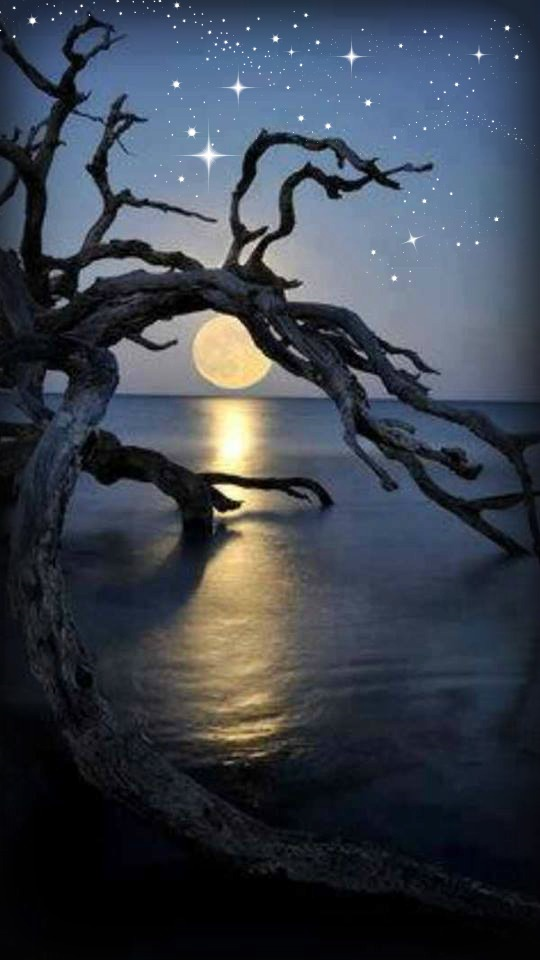 Gypsy Images Fallin Tree And Moon HD Wallpaper Background Photos