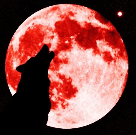 Blood Moon Wolf Wallpaper