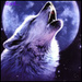 wolf howling at moon - wolves icon