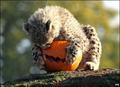 A Baby Cheetah Halloween 4
