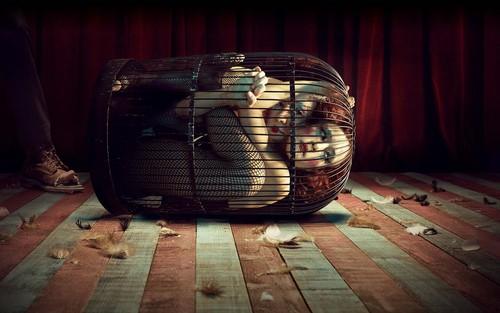 American Horror Story wolpeyper called American Horror Story: Freak ipakita