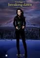 Bella Cullen - twilight-series photo