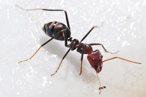 Science 壁纸 probably containing a carpenter ant, an ant, and a 火, 消防 ant entitled Big And Small Ant.