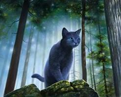 Bluestar the cat