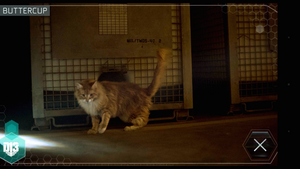 Buttercup at District 13