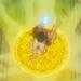 Cardcaptor Sakura Icons