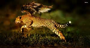 Cheetah ángel