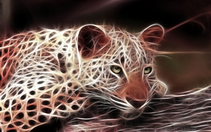 Cool Cheetah 3
