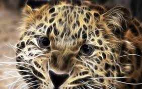 Cool Cheetah 4