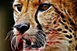 Cool Cheetah 5