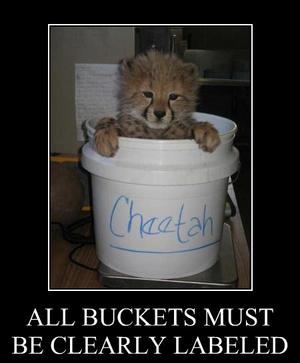 Funny Cheetah 13