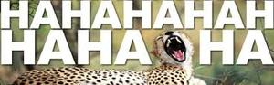 Funny Cheetah 15
