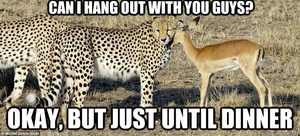 Funny Cheetah 16