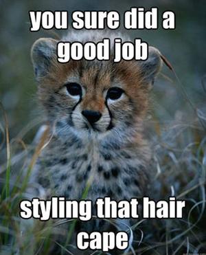 Funny Cheetah 17