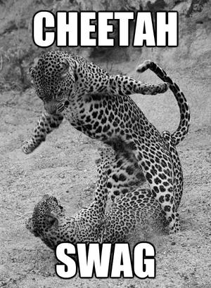Funny Cheetah 20