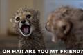 Funny Cheetah 22