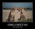 Funny Cheetah 23