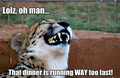 Funny Cheetah 25