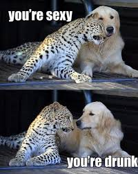 Funny Cheetah 29