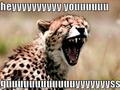 Funny Cheetah 9