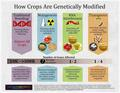 How Crops Are Genetically Modified?