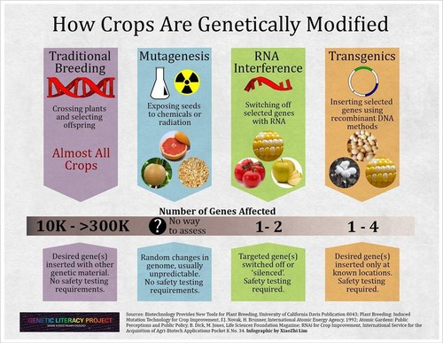 Science Hintergrund probably with a venn diagram titled How Crops Are Genetically Modified?
