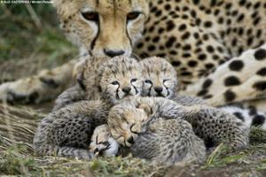 Newborns In A Pile