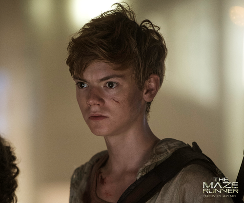 The Maze Runner پیپر وال containing a portrait entitled Newt
