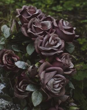 Purple roses.