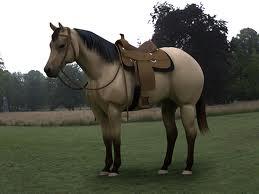 Q.H. w/ saddle