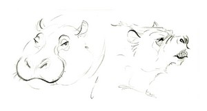 Sketches of mammals at the Los Angeles Zoo as research for Disney's Zootopia