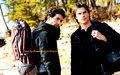 the-vampire-diaries - TVD Wallpaper ღ wallpaper