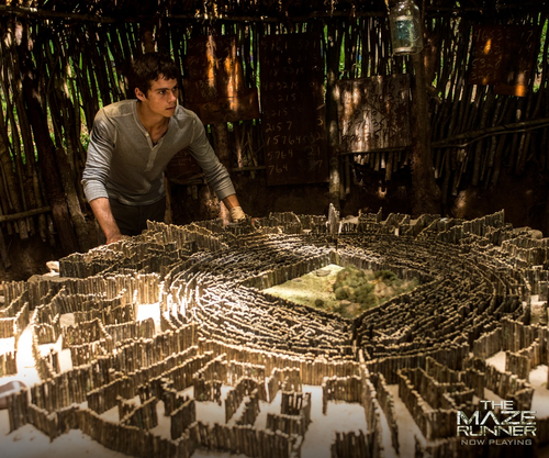The Maze Runner wolpeyper possibly containing a red cabbage entitled Thomas