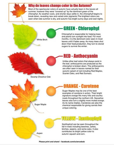 Science 바탕화면 titled Why Do Leaves Change Color In The Autumn?