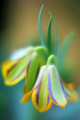 beautiful flowers - flowers photo