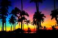 beautiful picks palms love - taylor-lautner photo