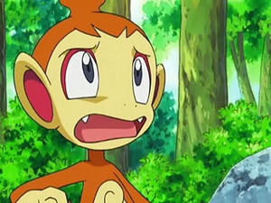 chimchar 5