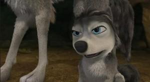 coyote realliy ?