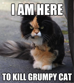 ✖ Cat Memes ✖