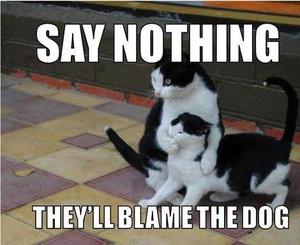 ♥ Cat Memes ♥