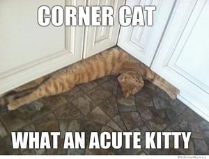 ❤ Cat Memes ❤