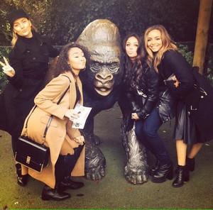 Лондон Zoo