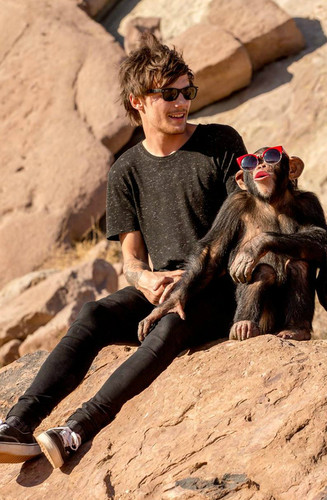 louis tomlinson wallpaper titled Steal My Girl