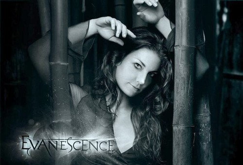 Evanescence wallpaper containing a chainlink fence entitled Amy Lee