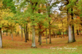 Autumn in southern Missouri - autumn photo