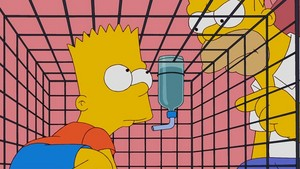 Bart in a cage