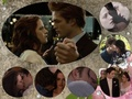Bella and Edward  - edward-and-bella fan art