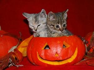 CUTE Katzen Halloween
