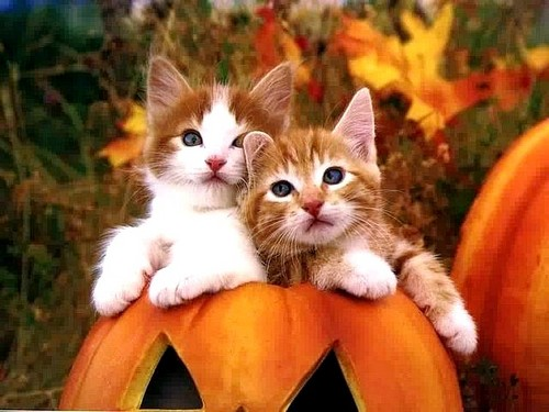 Cats wallpaper probably with a pumpkin, a tom, and a kitten entitled CUTE CATS HALLOWEEN