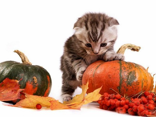 Cats Wallpaper With A Pumpkin An Acorn Squash And Entitled CUTE CATS HALLOWEEN